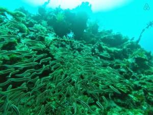 Corals in Cagdanao Island