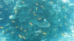 Marine life in Cagdanao