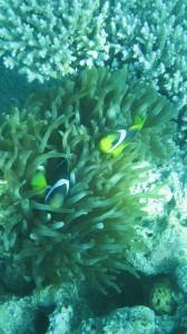 Beautiful Corals in Cagdanao